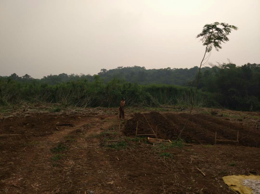 Kavling Saung Benih