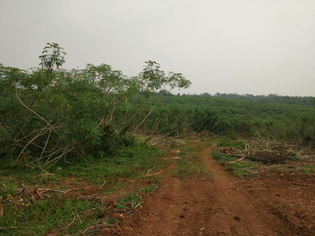 Lokasi Kavling Saung Benih