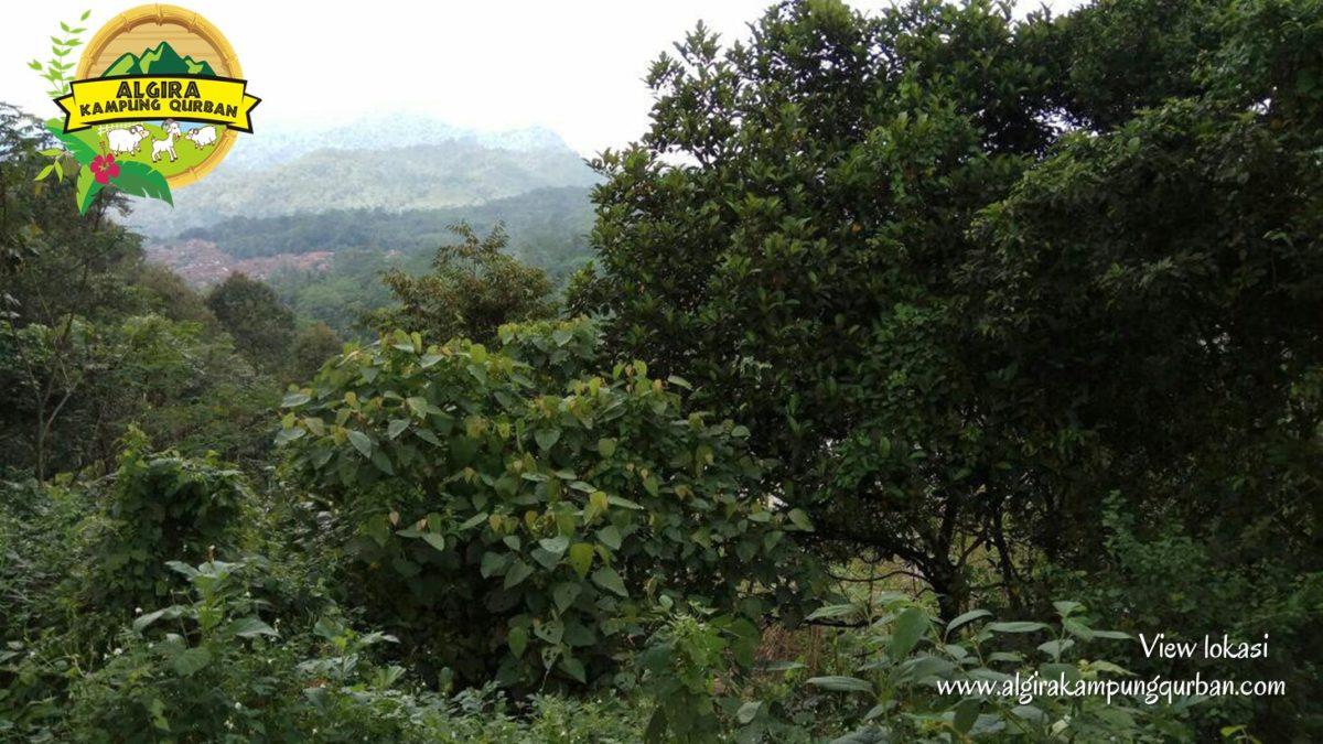 view-lokasi-1-algira-kampung-qurban.jpg