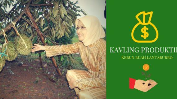 Kavling Produktif – Kavling Buah Lantaburo Tanjungsari