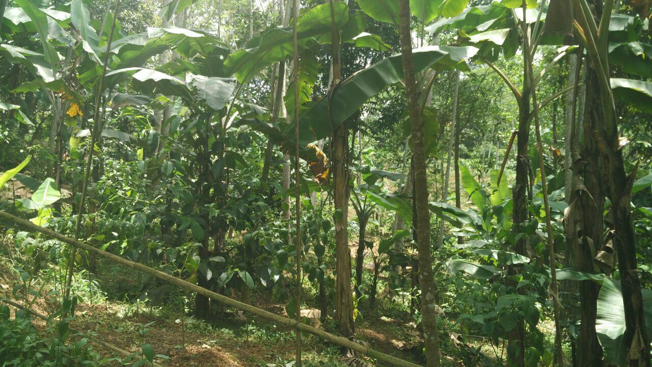 lokasi madania village cigudeg