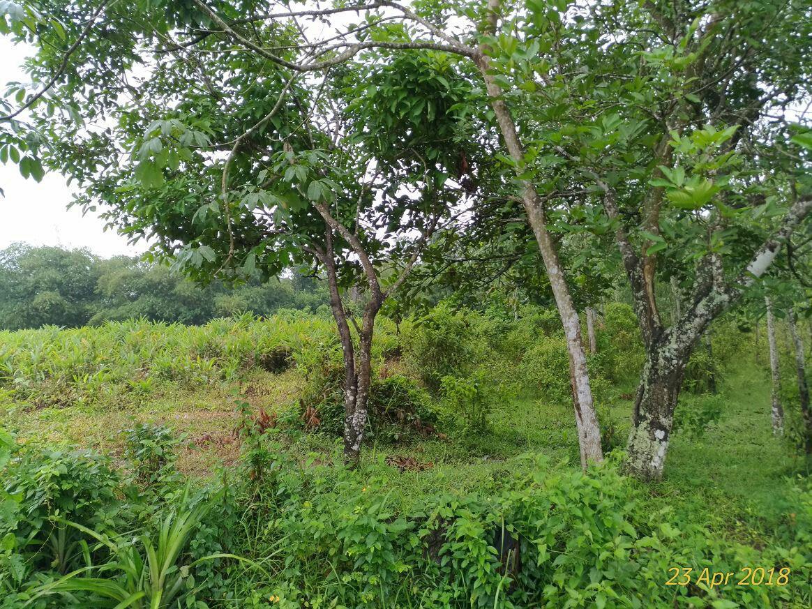 foto lokasi maja tropical garden